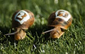 snails-1753611__480